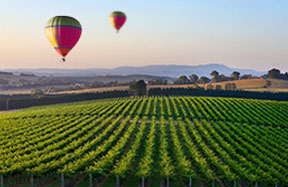 Winery Tours and Ballooning