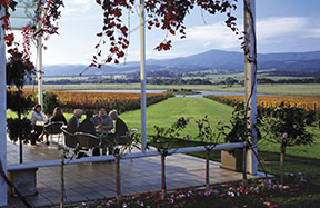 Winery Tours to the Yarra Valley
